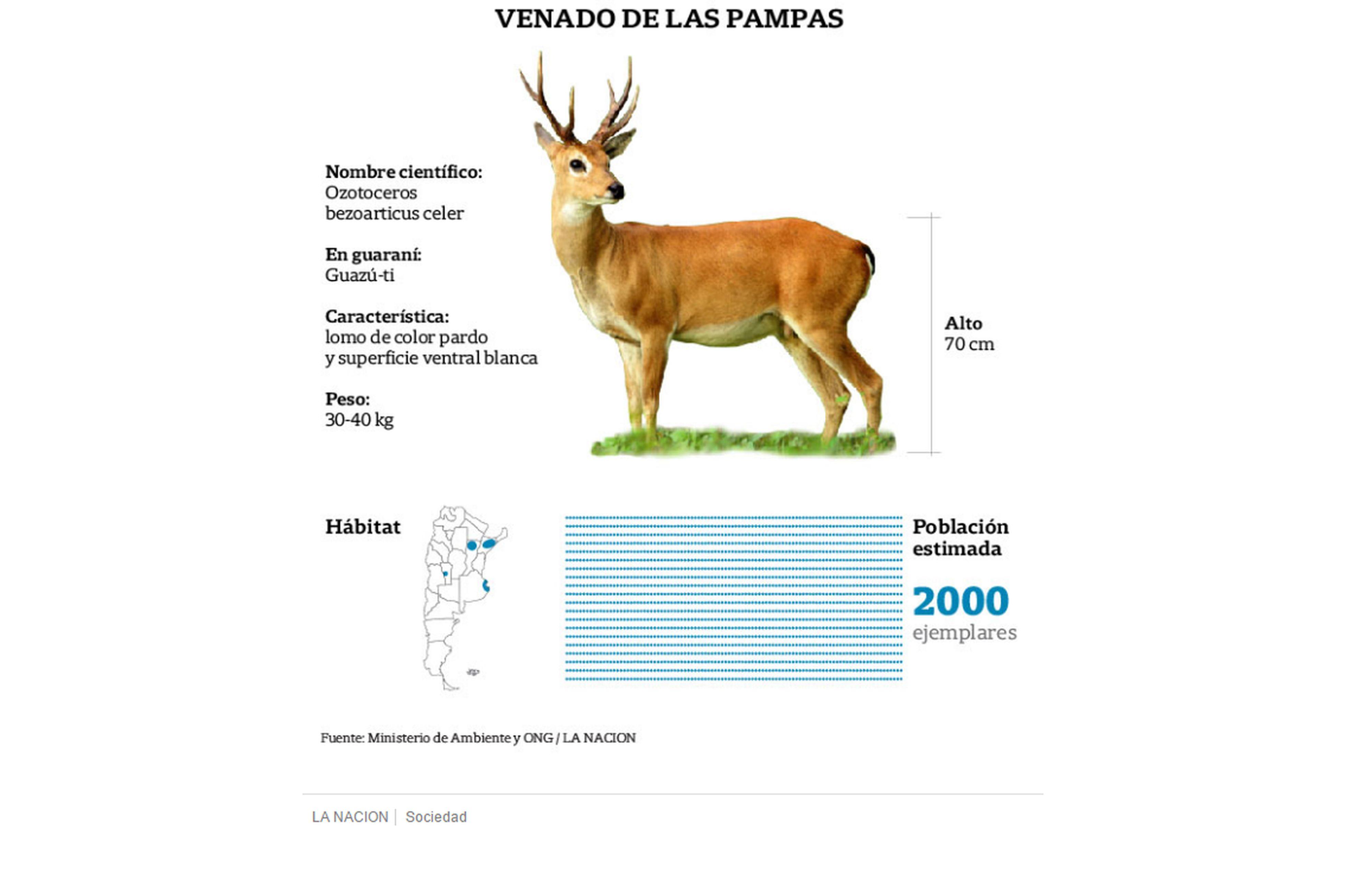 Peligro de extinción: seis especies están en situación crítica, una ...